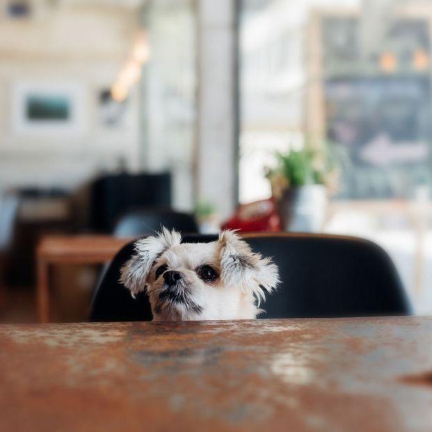 Restaurantes dog friendly de Valencia