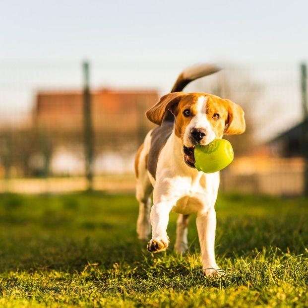 Ideas para proteger a tu perro de los insectos en verano