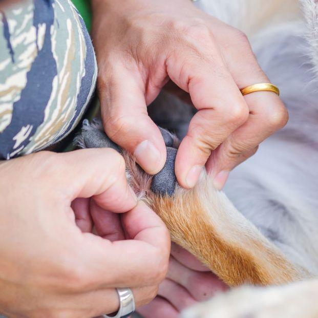 Cómo eliminar las pulgas de tu perro