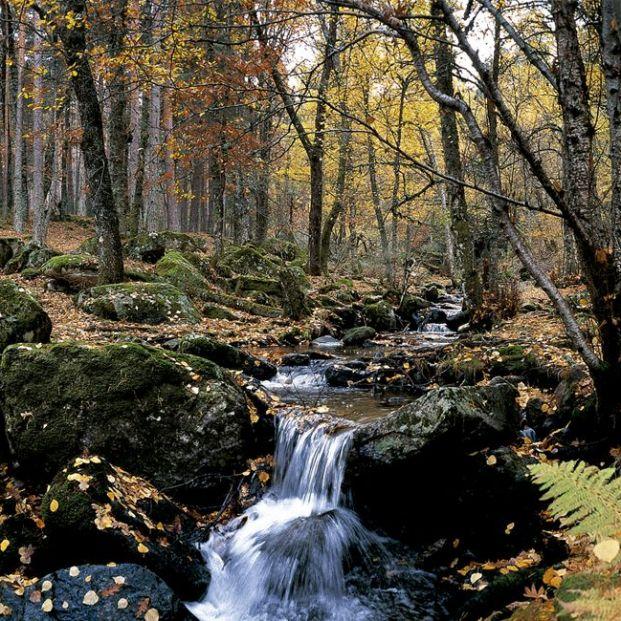 6 bosques en Madrid para disfrutar de la naturaleza