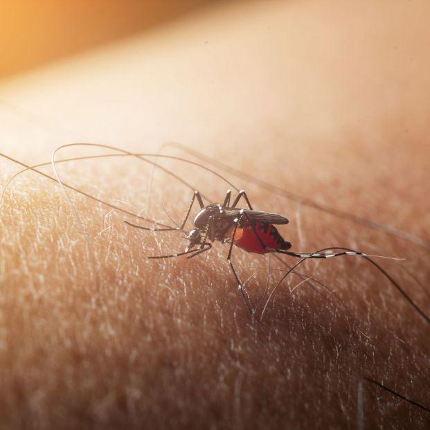 ¿Cuánto tiempo dura la picadura de un mosquito?