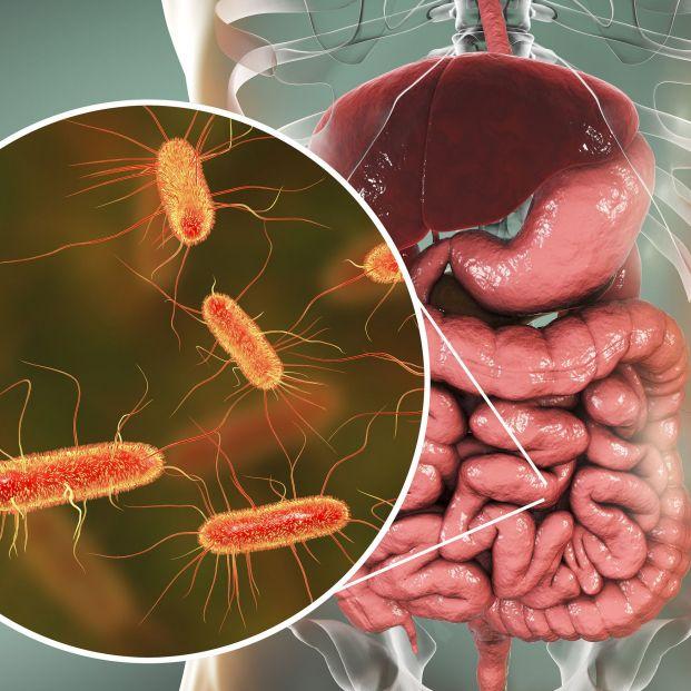 Bacterias del intestino (trasplante de heces)