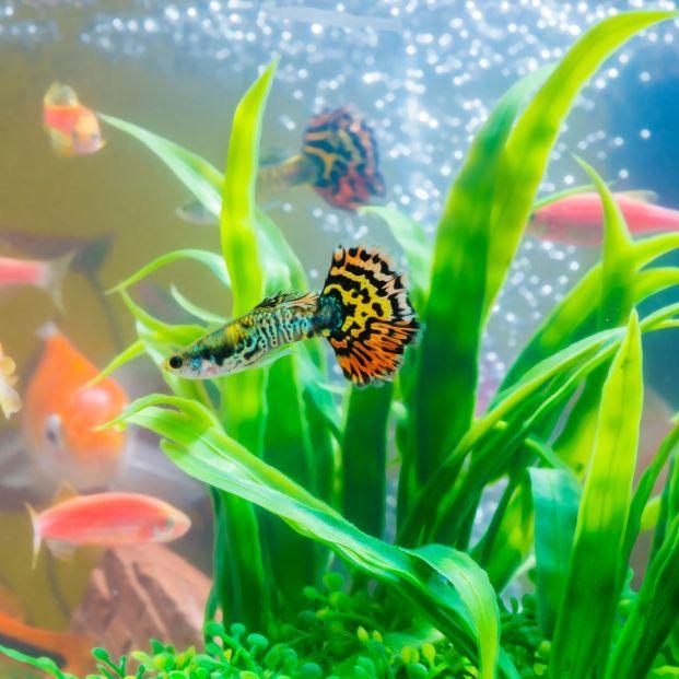 Las mejores plantas para tu acuario