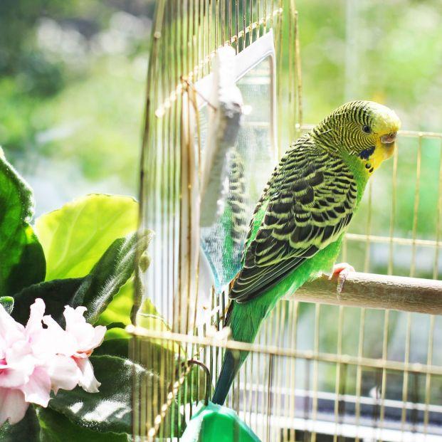 Razones para tener un pájaro doméstico