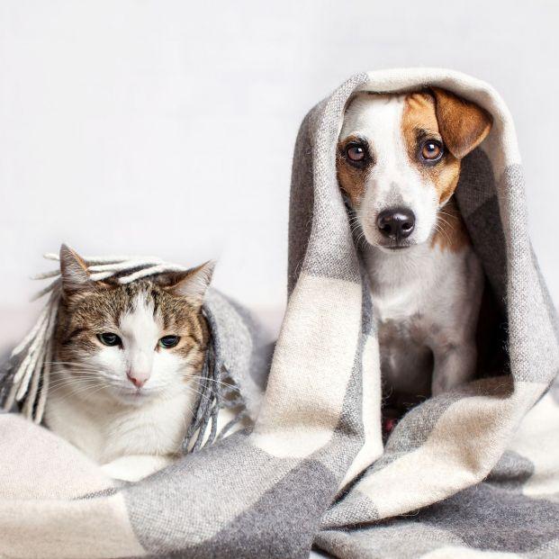 ¿Qué dicen las primeras investigaciones sobre las mascotas y el coronavirus?