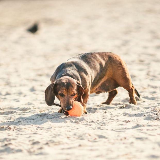 Las mejores playas caninas