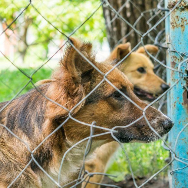 Multas por abandonar o maltratar animales