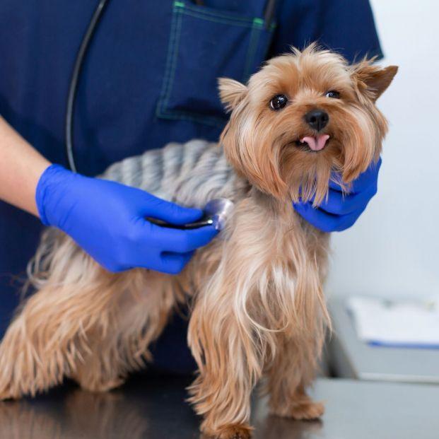 Contagio de enfermedades de mascotas. Zoonosis