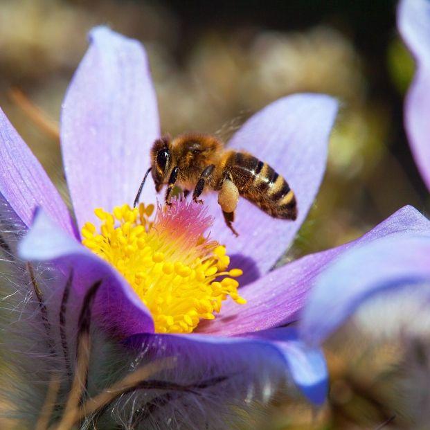 ¿Qué pasaría si desapareciesen las abejas?