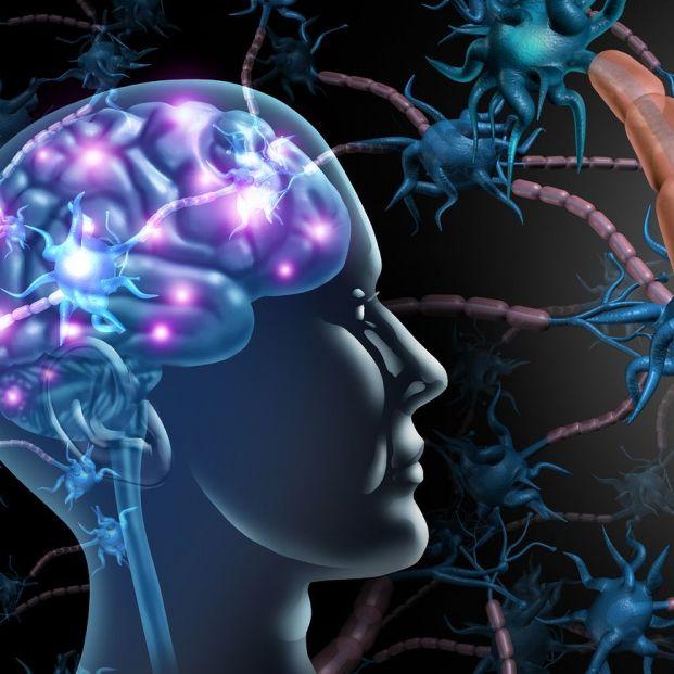 El mapa del cerebro