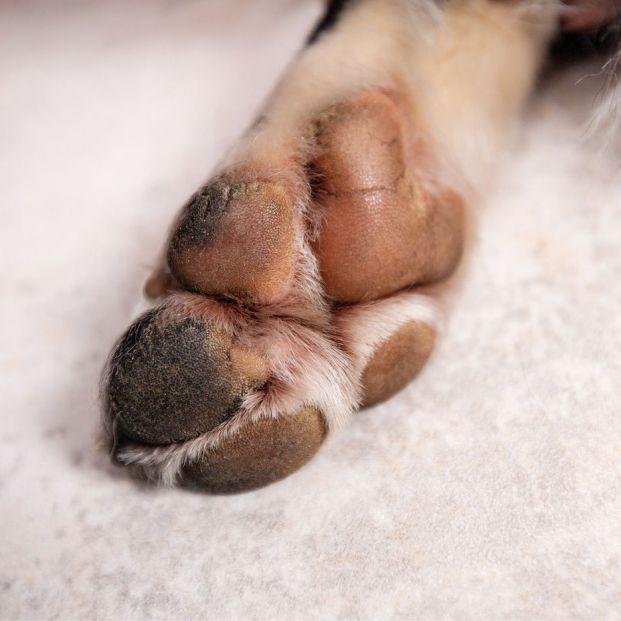 Cómo evitar que las almohadillas de tu perro se quemen con el calor