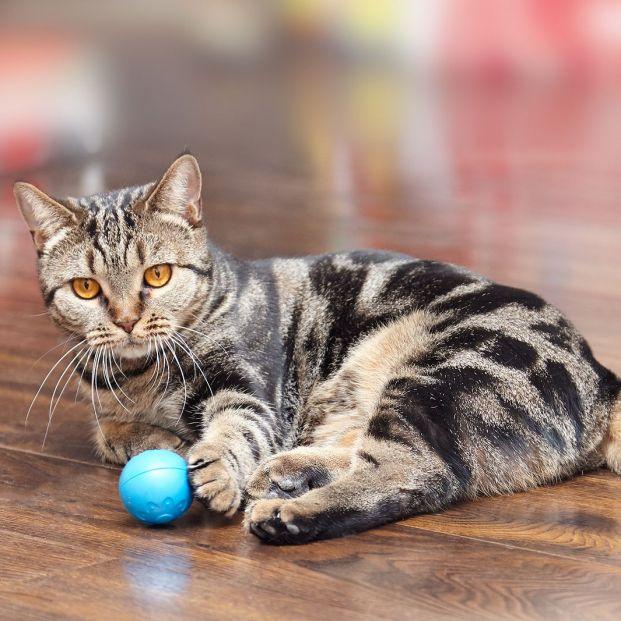 Juguetes para tu gato