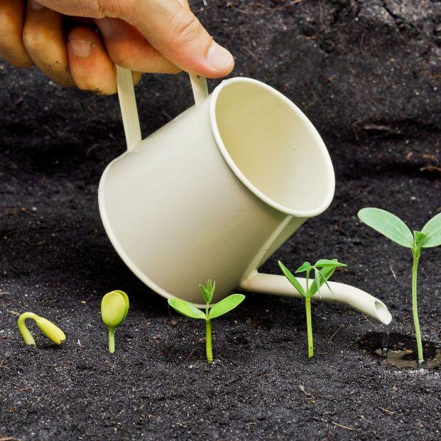 Cómo se germina una semilla (bigstock)