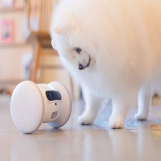 La última tecnología en el hogar que nos ayuda si tenemos mascotas