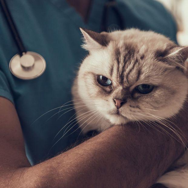 Cómo cuidar a tu perra o tu gata tras ser esterilizada