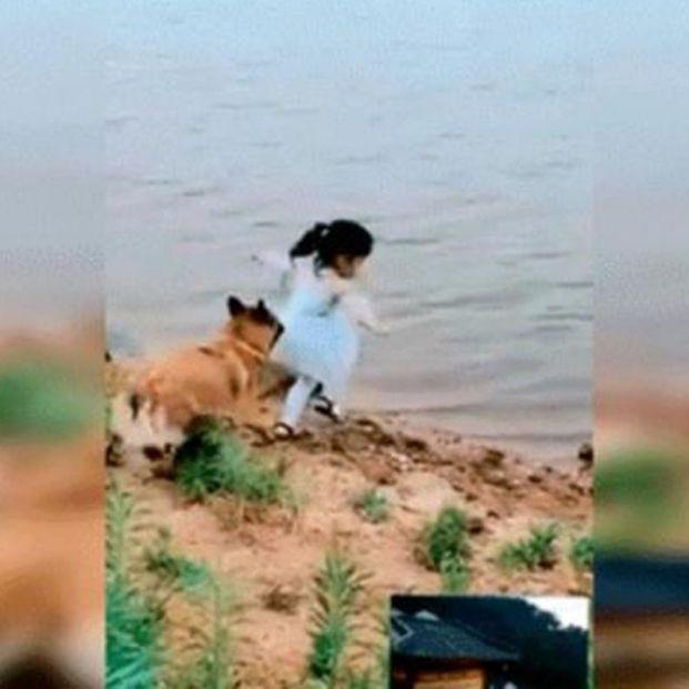 El vídeo viral de un perro que salva a una niña de caer a un lago