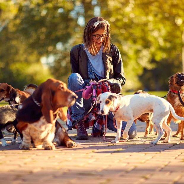 Guarderías de día para perros
