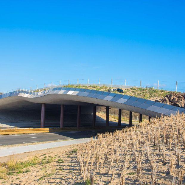 Ecoductos, pasos para que los animales crucen las carreteras