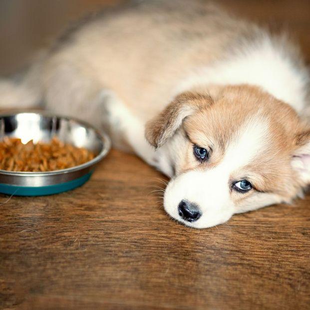 Dietas terapeúticas para tu mascota: ¿en qué consiste?