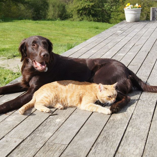 Conjuntivitis en perros y gatos