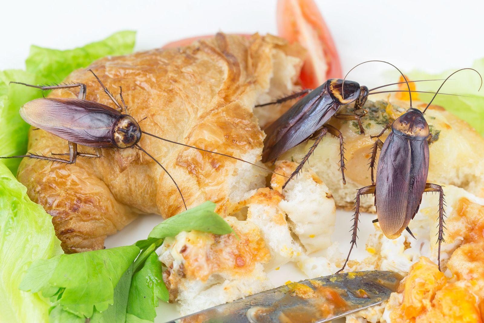 Cómo prevenir las cucarachas