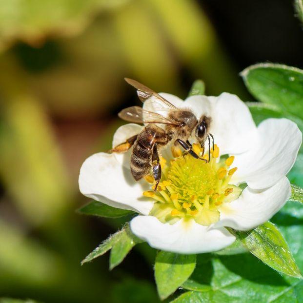 La miel de madroño como alimento efectivo contra el cáncer
