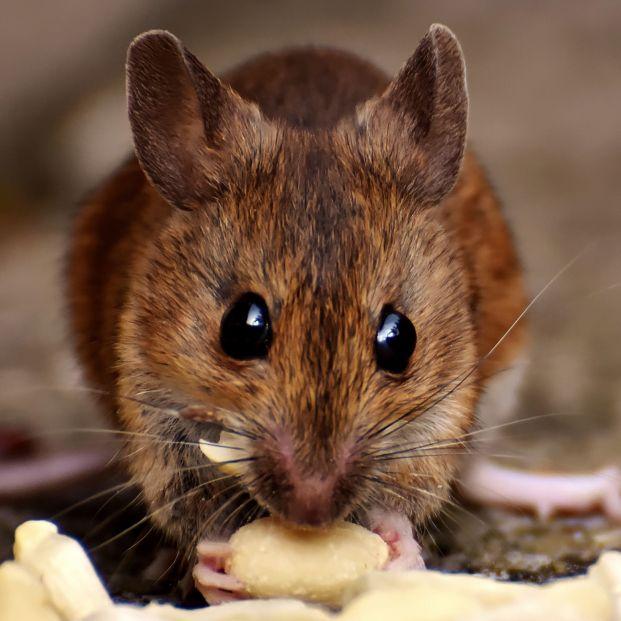 ¿Por qué una persona vive 79 años y un ratón 2?