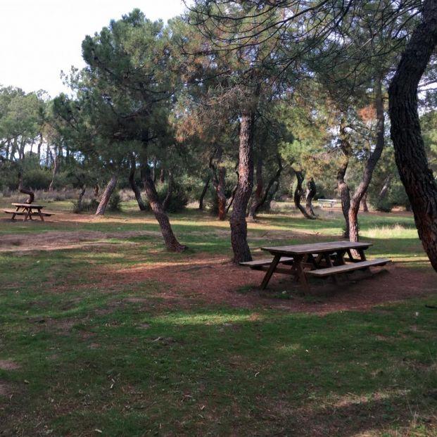 Disfruta de un día con tus nietos en alguno de los merenderos naturales en la Comunidad de Madrid