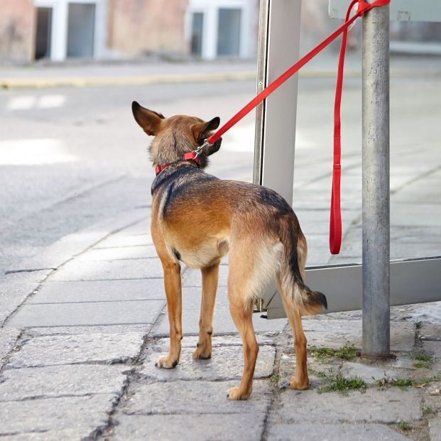 ¿A lugares públicos se puede acceder por ley con un perro?