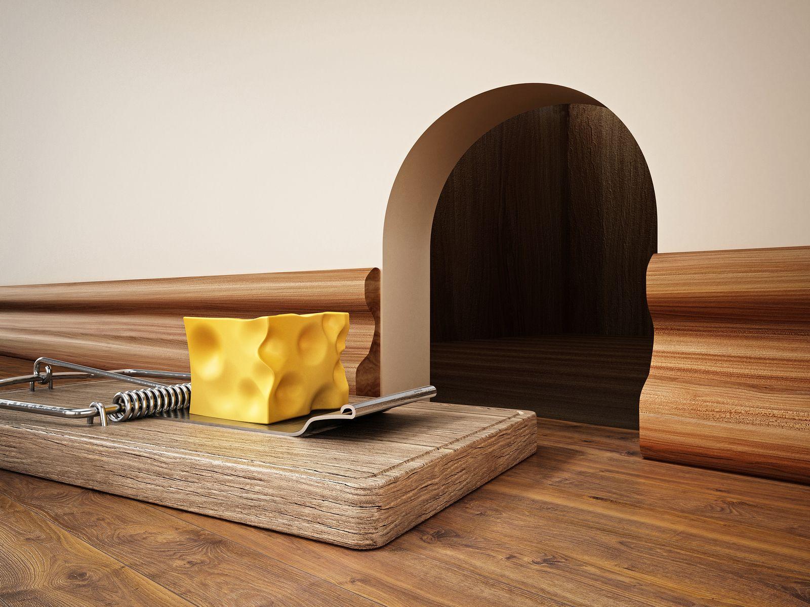 Cómo deshacerse de los ratones en su casa