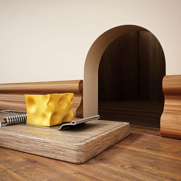¿Ratones o ratas en casa? Estos son los mejores consejos para eliminar estos roedores
