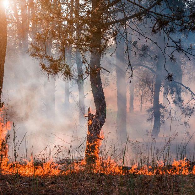 España, segundo país mediterráneo con más incendios cada año