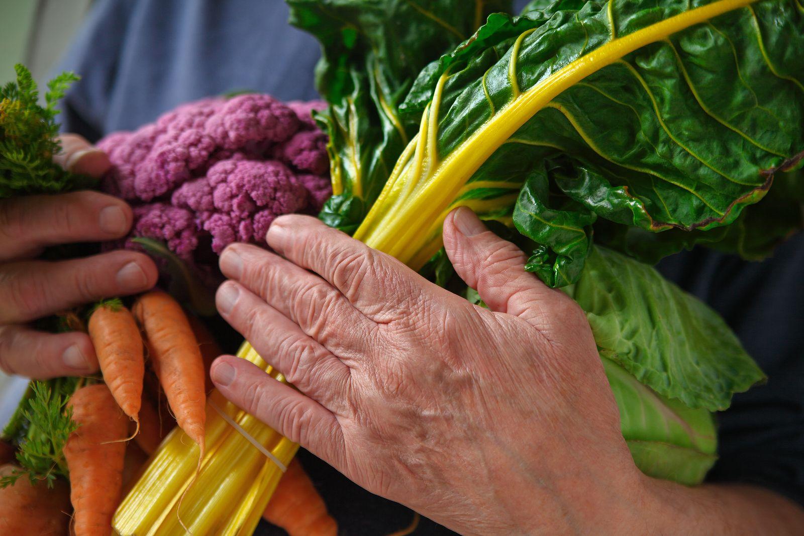 necesidades nutricionales básicas de adultos mayores de 65 años