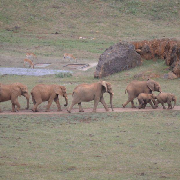 El Parque Natural de Cabárceno, un espacio único para observar especies animales de los cinco continentes