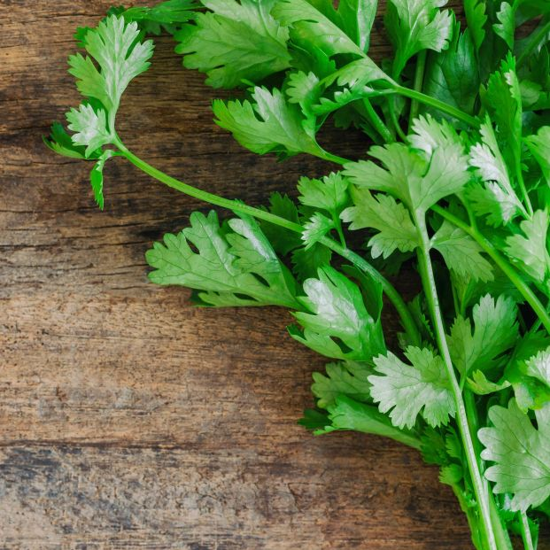 Los efectos terapéuticos del cilantro