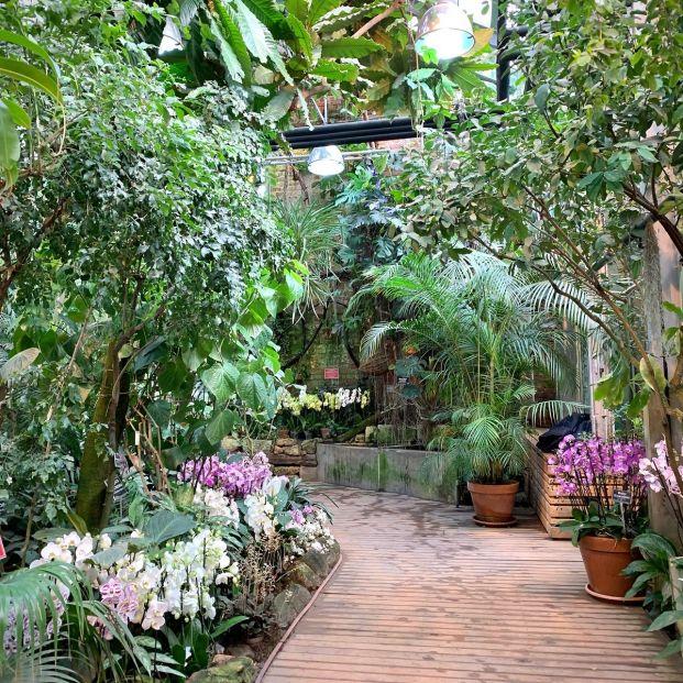 Las guarderías de plantas también existen