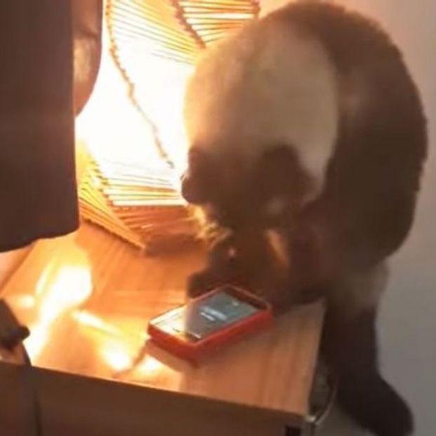 El gato que apaga alarmas