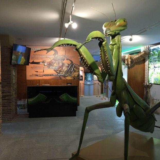 InsectPark, un centro de naturaleza único ubicado en Madrid para visitar con tus nietos