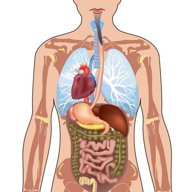 Disposición de los órganos en una persona con situs inversus