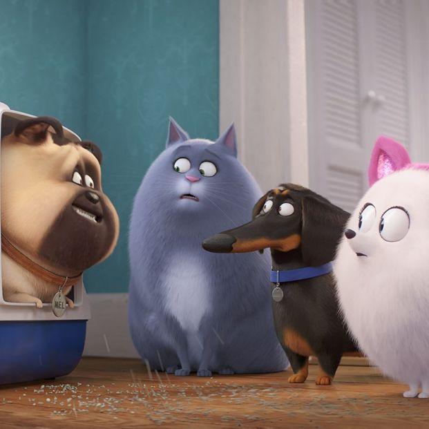'Mascotas 2'