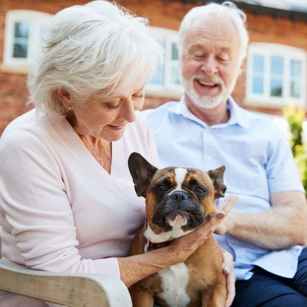 ¿Sabes qué son los perros braquicéfalos?