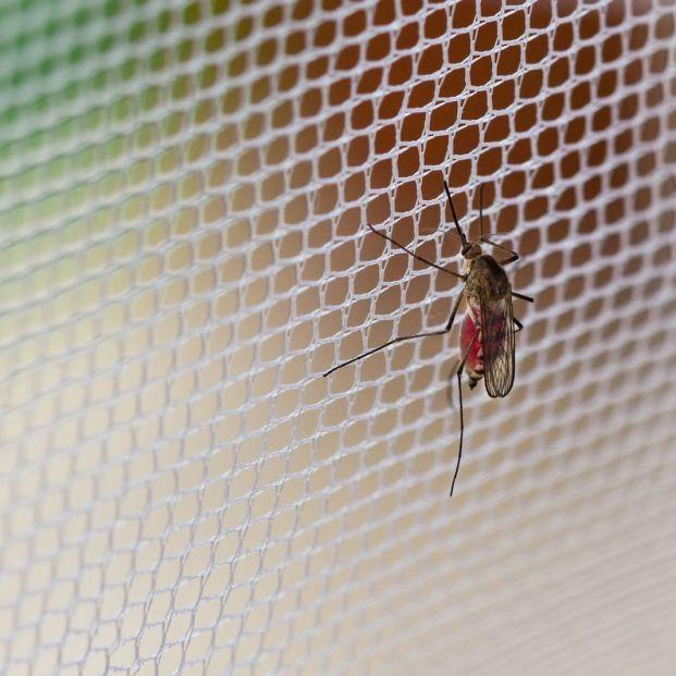 Tipos de mosquiteras que existen y sus características