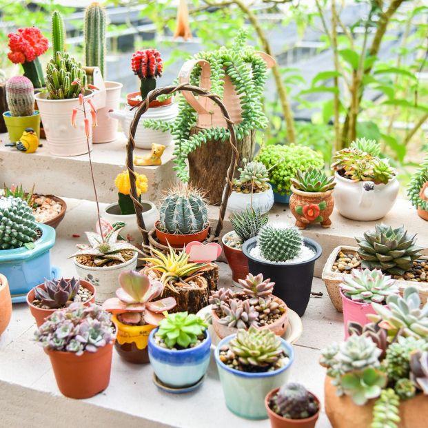Beneficios de tener un cactus en casa, según el Feng Shui