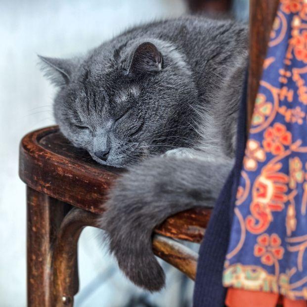 Síntomas de que tu gato también cumple años y se hace mayor