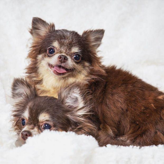 Cuáles son las mejores razas de perros para personas mayores