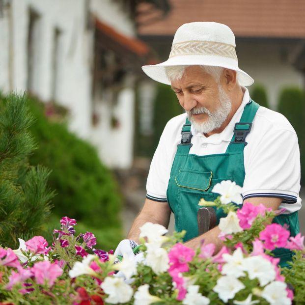 ¿Sabías que la harina de huesos hará que tus plantas estén perfectas?