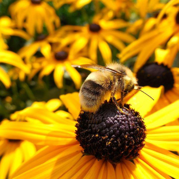 Las abejas, en peligro en todo el mundo