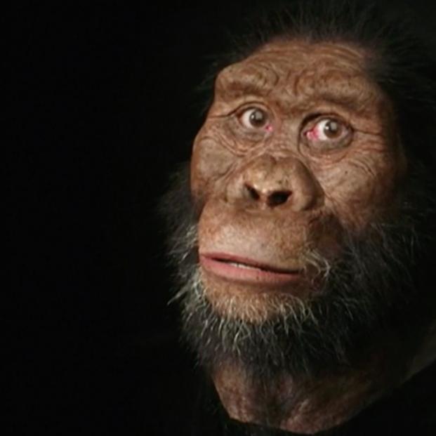Descubren el cráneo de un Australopithecus de hace más de 3,8 millones de años