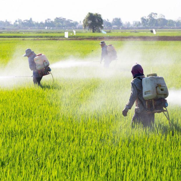 Residuos de pesticidas en los alimentos