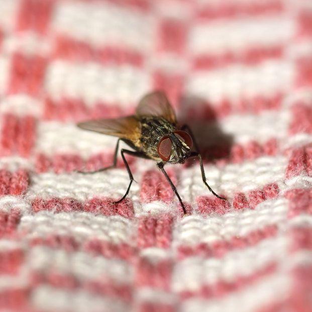 Cómo evitar que las moscas se reproduzcan en casa